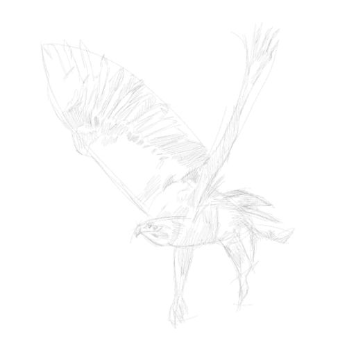 eagle sketch in pencil