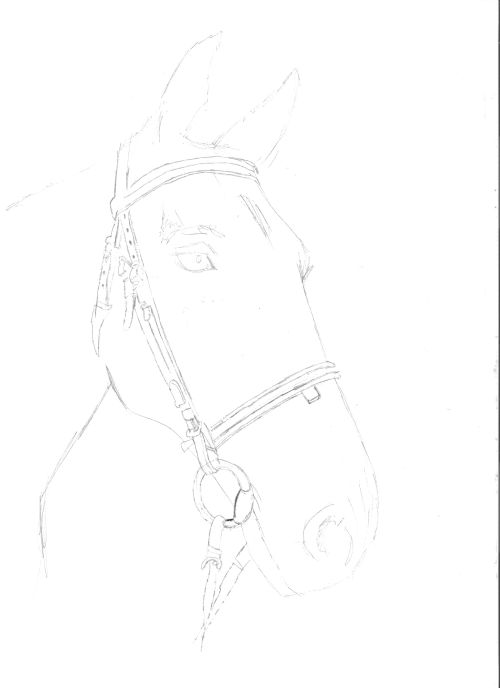 horse drawings to trace how to draw a realistic looking horse with