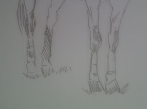 Horse Sketch in pencil 2