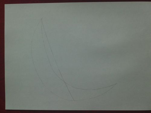 dolphin drawing guidelines 2