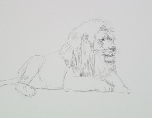 how to draw lions mane