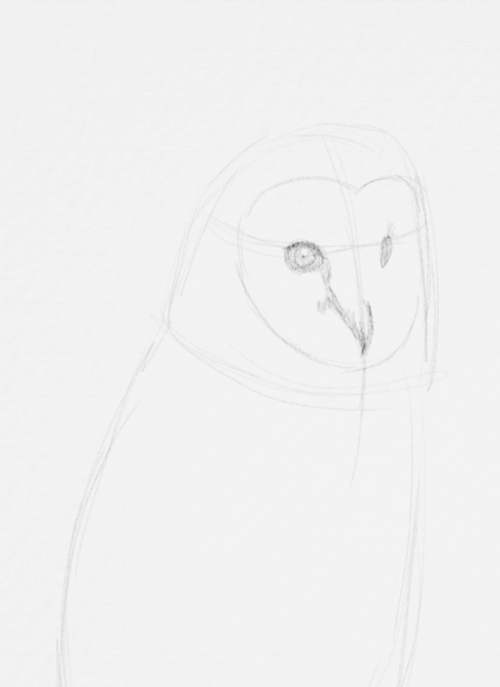 Owl Drawings step by step in Pencil 10