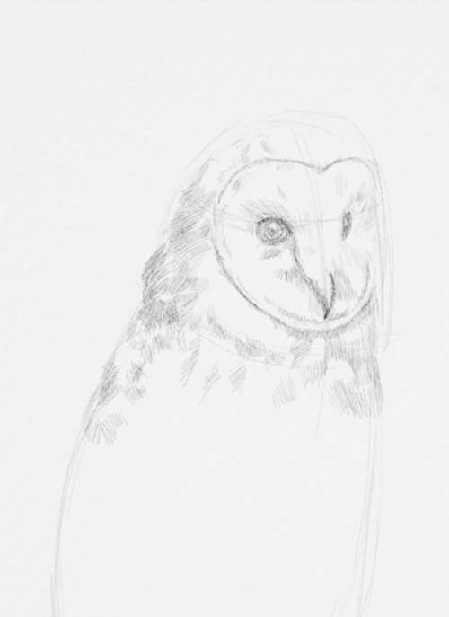Owl Drawings step by step in Pencil 11
