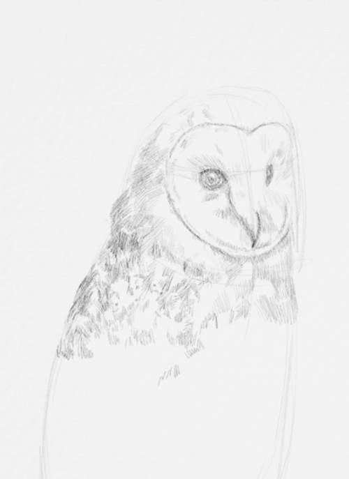 Owl Drawings step by step in Pencil 12