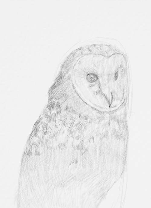 Owl Drawings step by step in Pencil 14