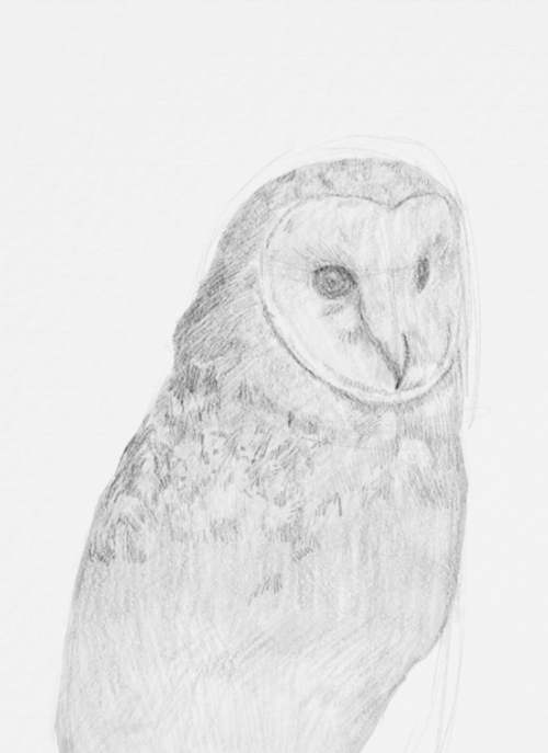 Owl Drawings step by step in Pencil 15