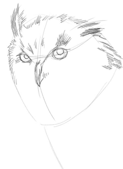 Owl Drawings step by step in Pencil 5