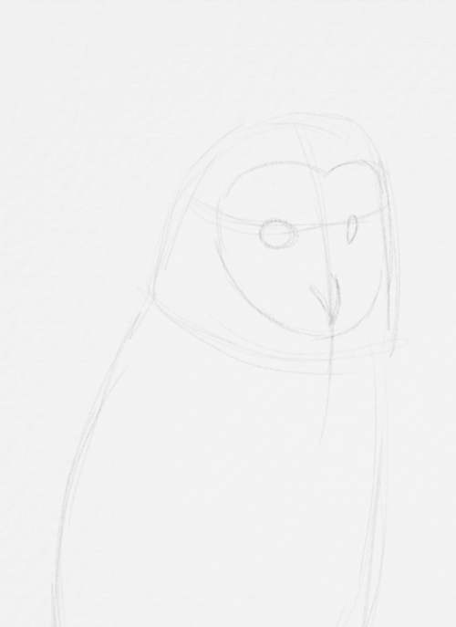 Owl Drawings step by step in Pencil 9