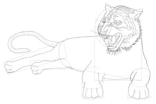 Line Drawing Of A Tiger S Face : Tiger drawing free lessons