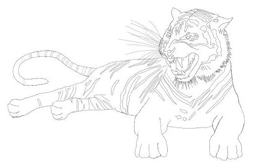 Tiger head drawing tutorial - photo#25