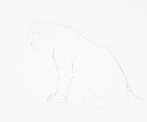 Tiger sketch in pencil 11