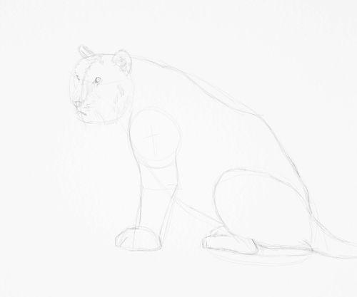 Tiger sketch in pencil 12