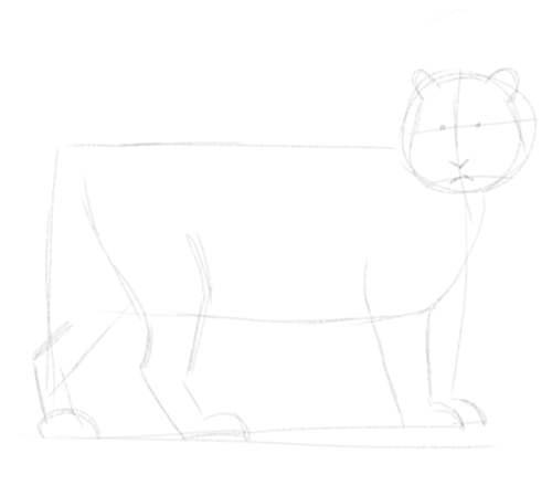 Tiger sketch in pencil 3