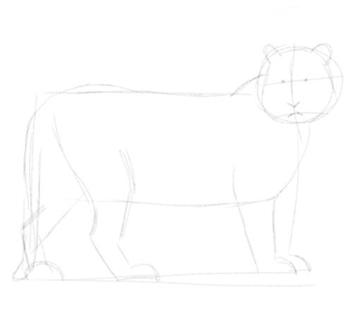 Tiger sketch in pencil 4