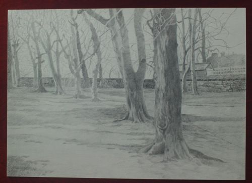 Tree Drawing Tutorial Adding Tone To A Preparatory Drawing