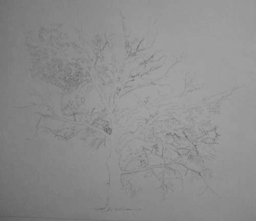 Tree Drawing  32