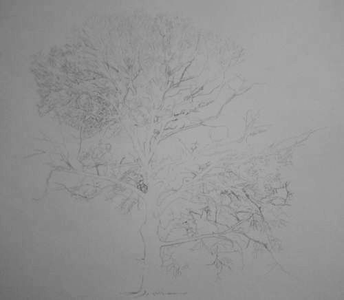 Tree Drawing  33
