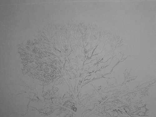 Tree Drawing  34