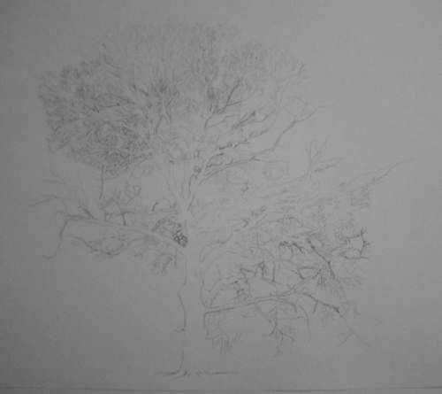 Tree Drawing  35