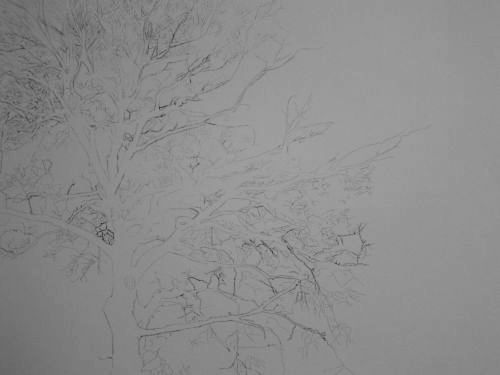Tree Drawing  36