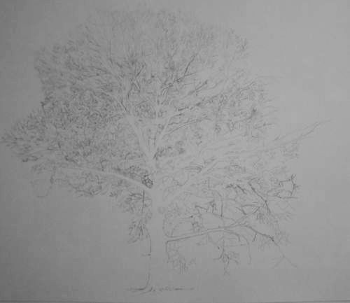 Tree Drawing  37