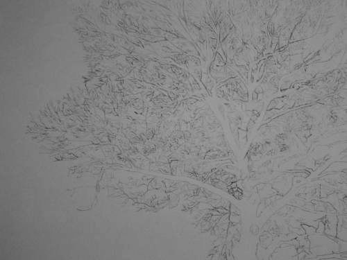Tree Drawing 38