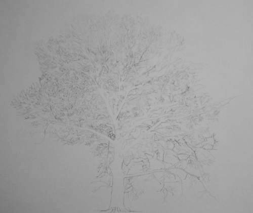 Tree Drawing  39
