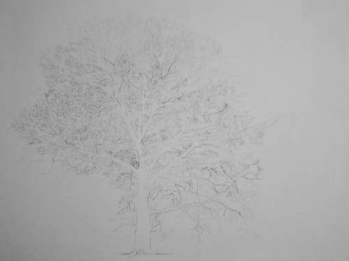 Tree Drawing  40