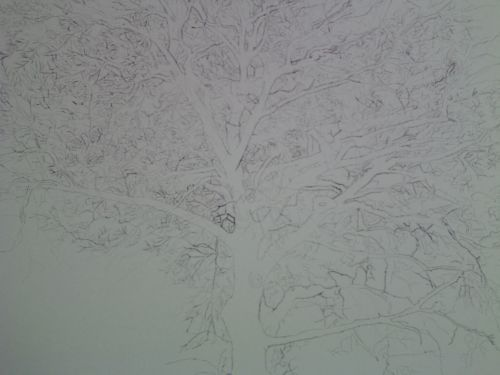 Tree Drawing 41
