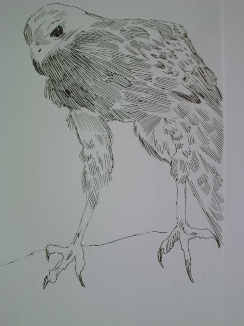 pen and ink eagle drawings 14