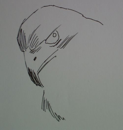 pen and ink eagle drawings 5