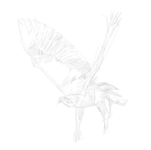 eagle sketch in pencil