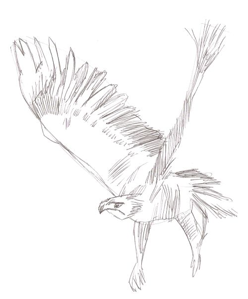 how to draw an eagle flying on sketchbook