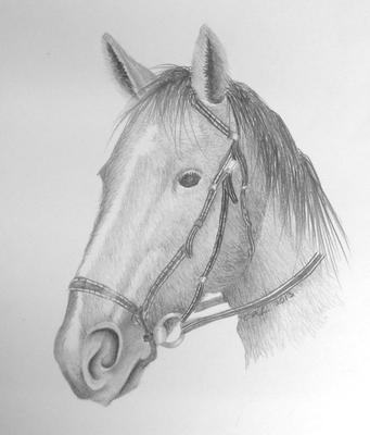 My horse drawing
