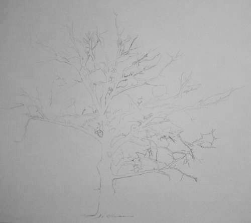 Tree Drawing 31