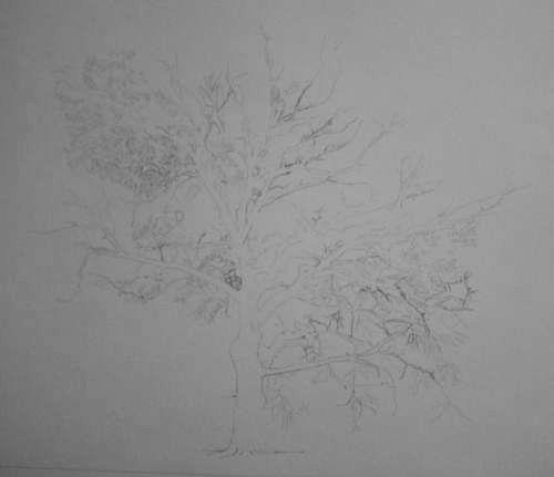 Tree Drawing  32