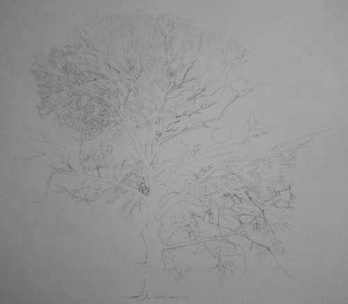 Tree Drawing  33