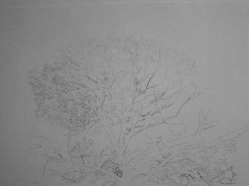 Tree Drawing  34