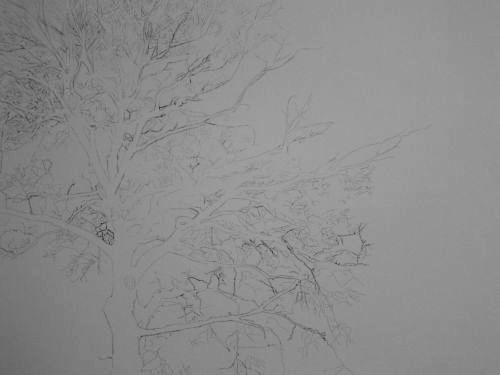 Tree Drawing  36