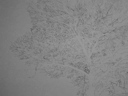 Tree Drawing 38