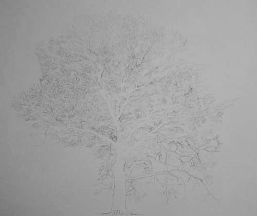 Tree Drawing  39